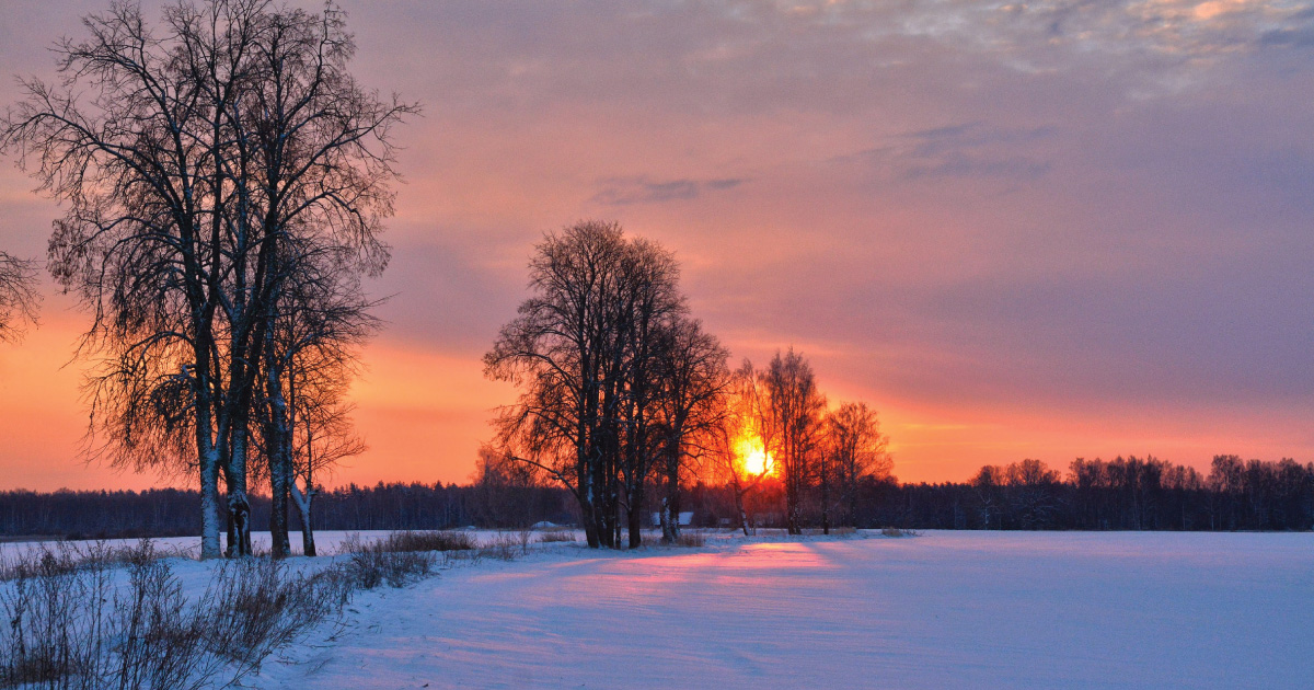 Trees in a field covered in snow at sunset
